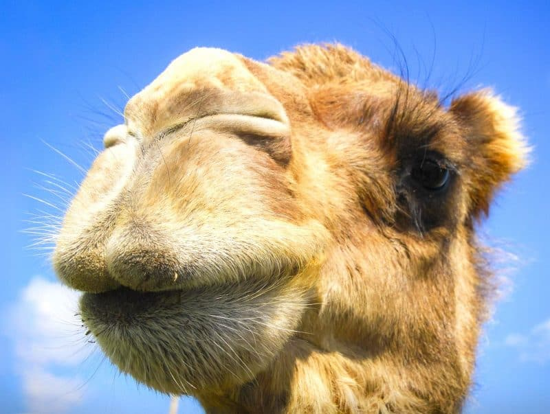 Hyperbaric Chamber Camel